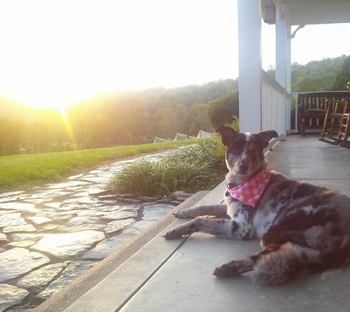 Cowgirl, Good Dog by Cherie Haas | CherieDawnLovesFire.com